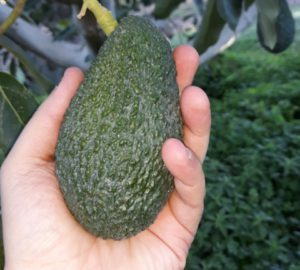 Avocado Streaming
